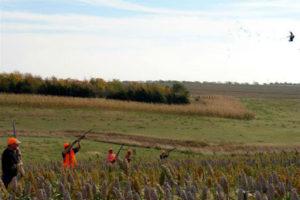 Circle H Ranch hunters