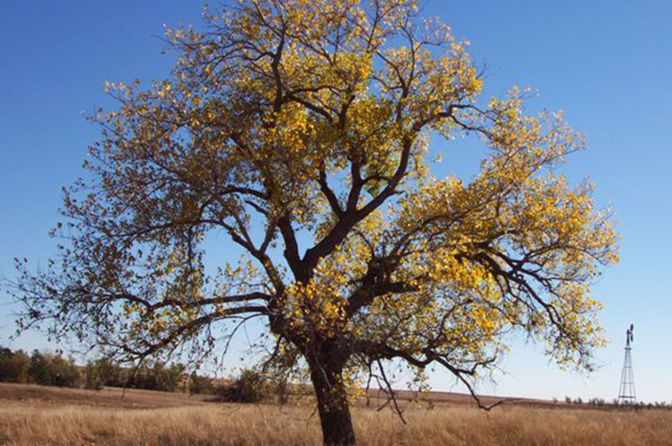 Signature tree at Circle H Ranch
