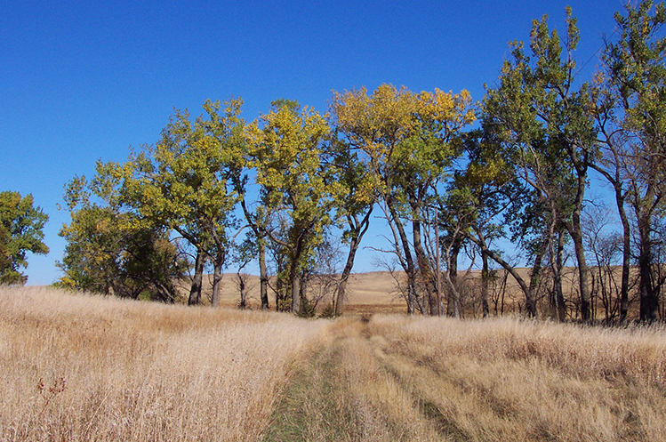 Prairie land at Circle H Ranch